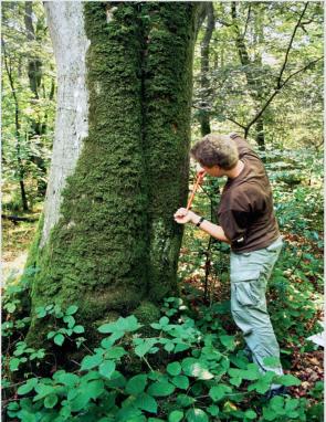 Det er super dejligt, at I i dag er kommet herind forbi. Jeg sætter altid pris på, når I bruger tid på min blog. I dag skal vi tale om miljøbevidsthed bl.a. omkring skovrejsning og skove.